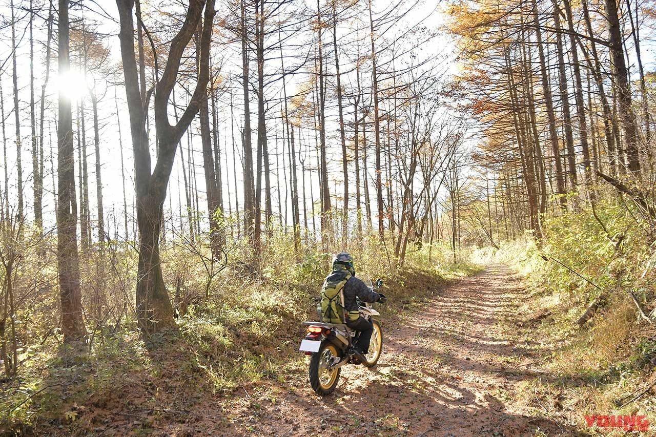 榛名の林道